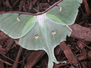 Name this butterfly 005