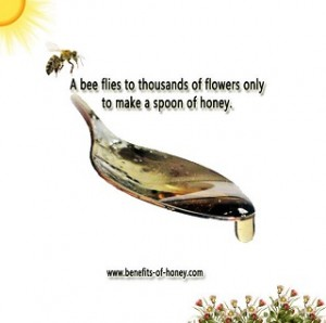 bee-honey-facts-poster